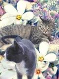 Mimi & Molly - Photoshop montage & Corel Painter