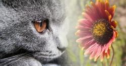 Cat & Flower - Photoshop montage